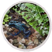 Poison Dart Frog Round Beach Towel by Carol Ailles