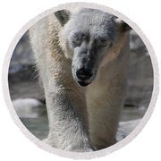 Polar Bear Balance Round Beach Towel by DejaVu Designs