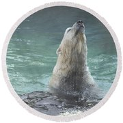 Polar Bear Jumping Out Of The Water Round Beach Towel by John Telfer