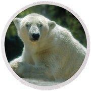 Polar Bear Portrait Round Beach Towel