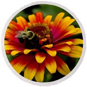 Round Beach Towel featuring the photograph Pollenating Bumblebee by James C Thomas