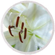 Pollinated White Tiger Lily Round Beach Towel