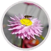 Round Beach Towel featuring the photograph Pollination by Cathy Mahnke