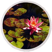 Pond Lily Round Beach Towel
