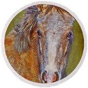 Pony Portrait  Round Beach Towel