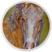Pony Portrait  Round Beach Towel