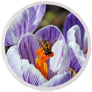 Round Beach Towel featuring the photograph Popping Spring Crocus by Debbie Oppermann