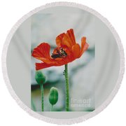 Poppy - 1 Round Beach Towel