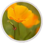 Round Beach Towel featuring the photograph Poppy II by Ronda Kimbrow