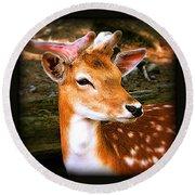 Portrait Male Fallow Deer Round Beach Towel