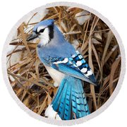 Portrait Of A Blue Jay Round Beach Towel