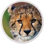 Portrait Of A Cheetah Cub Round Beach Towel by Nick  Biemans