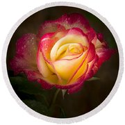 Portrait Of A Double Delight Rose Round Beach Towel