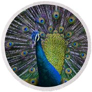 Portrait Of A Peacock Round Beach Towel by Venetia Featherstone-Witty