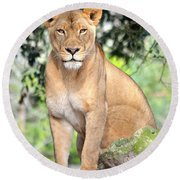 Portrait Of A Proud Lioness Round Beach Towel by Richard Bryce and Family