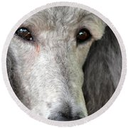 Portrait Of A Silver Poodle Round Beach Towel