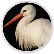 Portrait Of A Stork With A Dark Background Round Beach Towel