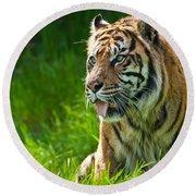 Portrait Of A Sumatran Tiger Round Beach Towel by Jeff Goulden
