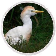 Portrait Of A White Egret Round Beach Towel