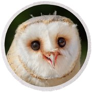Portrait Of A Young Barn Owl Round Beach Towel