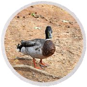 Round Beach Towel featuring the photograph Portrait Of An Alabama Duck 2 by Verana Stark