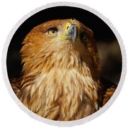 Portrait Of An Eastern Imperial Eagle Round Beach Towel