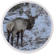 Elk Bull In Wind Cave National Park Round Beach Towel