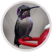Round Beach Towel featuring the photograph Posing Juvenile Hummingbird Anna by Jay Milo