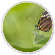 Round Beach Towel featuring the photograph Postman On A Leaf by Bryan Keil