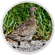 Round Beach Towel featuring the photograph Prairie Chicken Run by Janice Rae Pariza