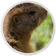 Prairie Dog Portrait Round Beach Towel by Dan Sproul