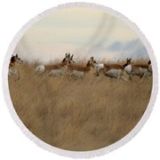 Prairie Pronghorns Round Beach Towel