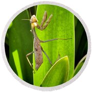 Round Beach Towel featuring the photograph Praying Mantis by Kasia Bitner