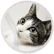 Precious Kitty Round Beach Towel