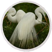 Preening Pair Round Beach Towel