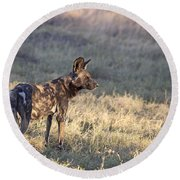 Round Beach Towel featuring the photograph Pregnant African Wild Dog by Liz Leyden