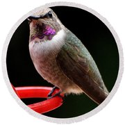 Round Beach Towel featuring the photograph Pregnant Female Caliope With Purple Throat by Jay Milo
