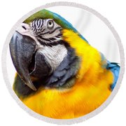 Round Beach Towel featuring the photograph Pretty Bird by Roselynne Broussard