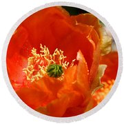 Prickly Pear In Bloom Round Beach Towel