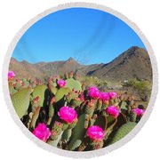 Prickly Pear In Spring Round Beach Towel