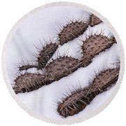 Prickly Pear On Ice Round Beach Towel