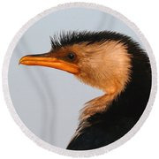 Profile Of A Young Cormorant Round Beach Towel