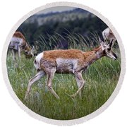 Pronghorn Antelopes An A Grassy Ridge Round Beach Towel