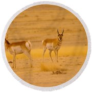 Pronghorns Round Beach Towel