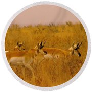 Pronghorns On The Move Round Beach Towel
