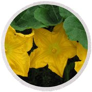 Pumpkin Blossom Trio Round Beach Towel