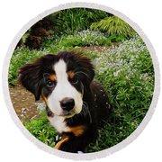 Puppy Art - Little Lily Round Beach Towel