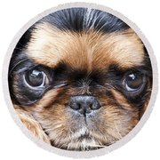 Puppy Love Round Beach Towel by Jeannette Hunt