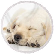 Puppy Sleeping On Paws Round Beach Towel