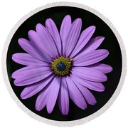 Purple African Daisy Round Beach Towel